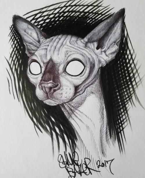 Sphynx sketch